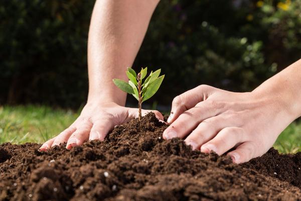 Servicio de Jardinería CAYSA